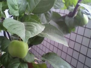 青いリンゴ
